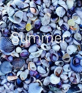 blue, clam and summer