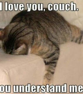 cat, couch and cute