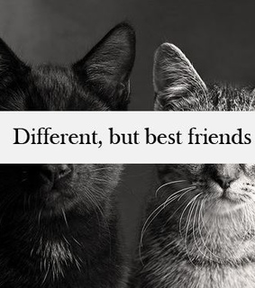 amazing, best and best friends