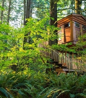 architecture, cabin and ferns