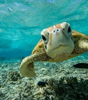 summer, water and seaturtle