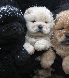 black, brown and cutest