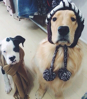 cold, confy and dogs
