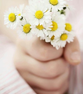 beautiful, flower and flowers