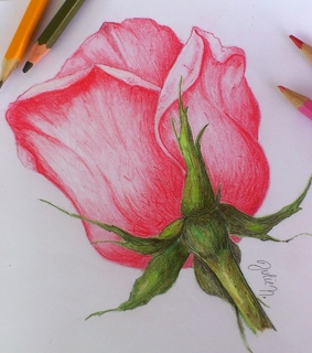 colored pencils, drawing and flower