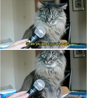 cat, funny and gag