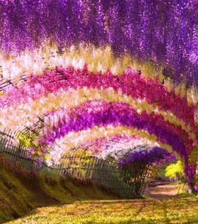amazing, colors and flowers