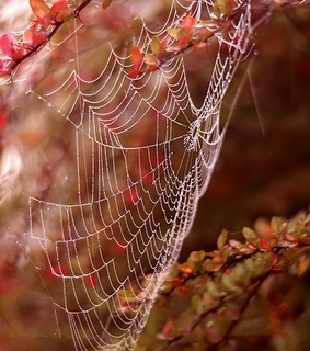 autumn, fall and spider web