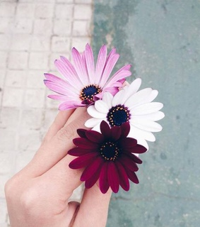 blume, flower and pink