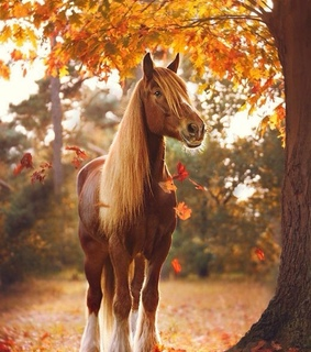 animals, autumn and beautiful