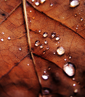 autumn, beauty and dew