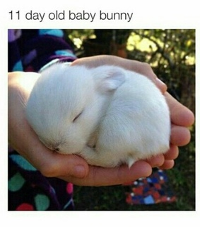 11, baby and bunny