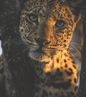 animals, beauty and cat