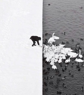 black&white, ducks and feeding