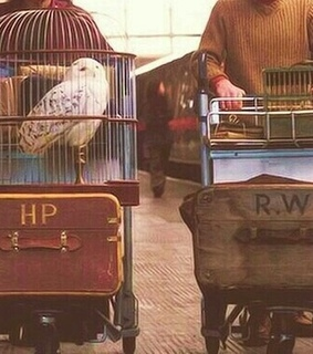 bird, books and harry potter
