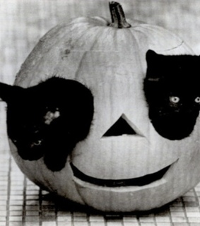 black and white, black cats and cute