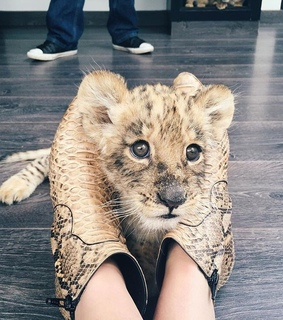 adorable, afrika and animal