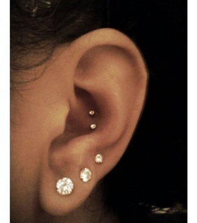 conch, different and lobe