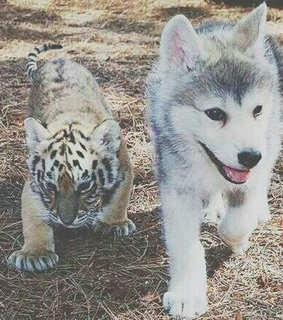 animals, cheeta and cute