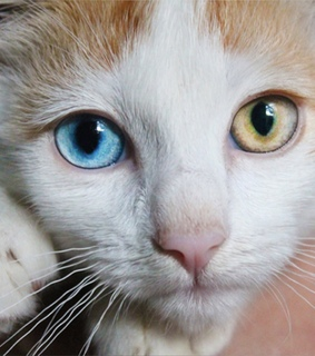 adorable, beautiful and cat eyes