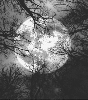 arvores, branches and darkness