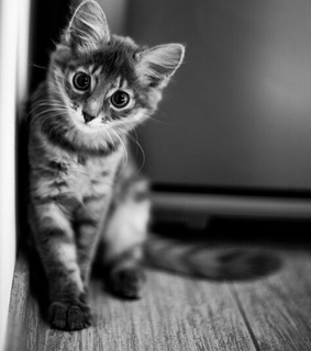 black and white, cat and cute