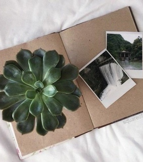 are, books and cactus