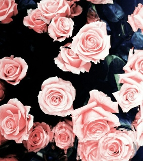 blume, love and pink