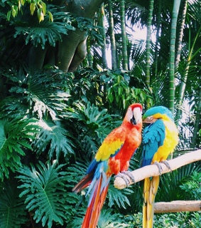 animals, birds and colors