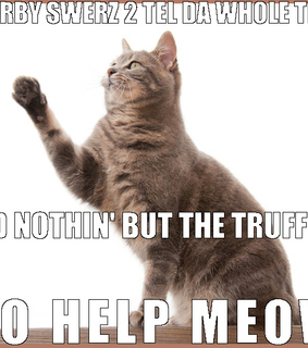 funny cat, oath cat and cat under oath