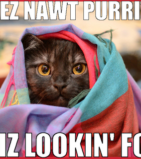 funny cat, meow and purrito