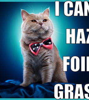 funny cat, yummy and cat memes