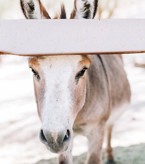 animals, cute and donkey