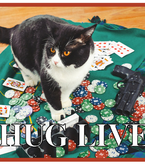 funny cat, funny cats and thug life
