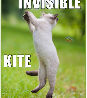 funny cat, invisible cat and invisible kite