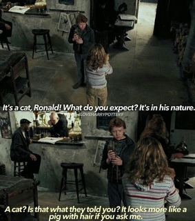 argument, harry potter and hermione