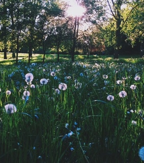 clouds, dandelions and nature