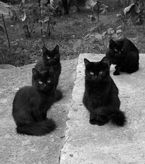 adorable, black and black cats