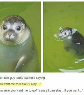 confusion, funny and seal