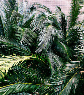 ferns and plants