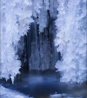 cove, forest and ice