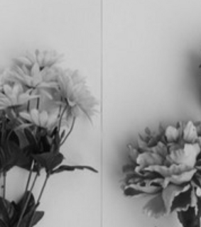 black and white, wallpaper and flower background