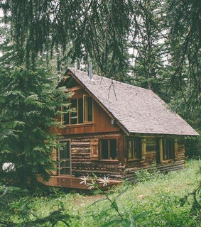 house, forest and log cabin
