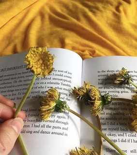 pressed flowers, books and yellow