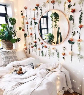 plants, dorms and room