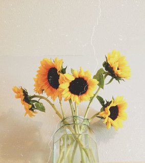 beautiful flower, sunflowers background and wallpaper