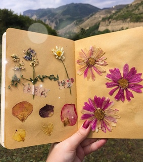 herbarium, art and flower