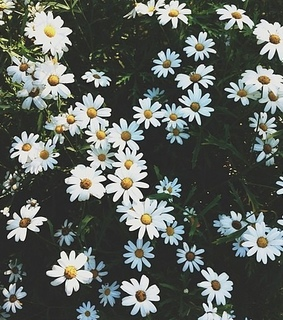 cute flowers, flower and flowers background
