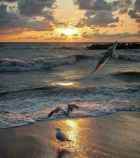 sunset, seagull and nature