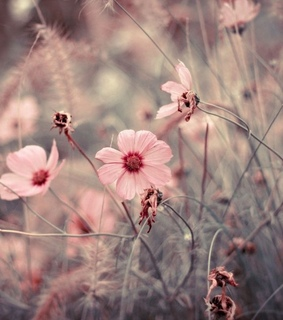 pink flowers, wallpaper and vintage flowers